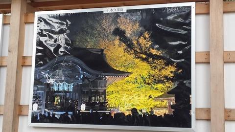 葛飾八幡宮の銀杏ライトアップ