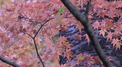 もみじ山2016大町公園