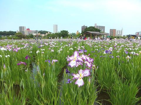 image1_菖蒲園1