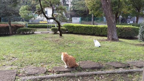 じゅんさい池緑地の猫