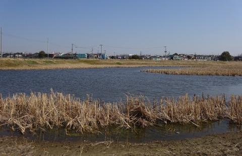 国分川調整池緑地の中池