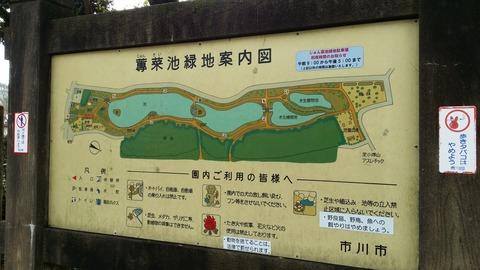 市川じゅんさい池案内図