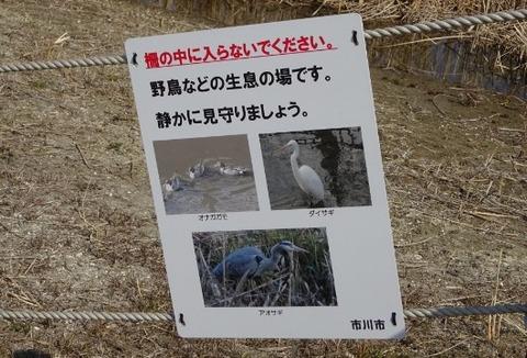 国分川調整池緑地で見れる野鳥