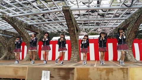 市川乙女/里見公園の桜まつり2016