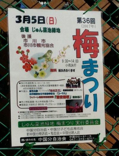 梅まつり2017/市川乙女