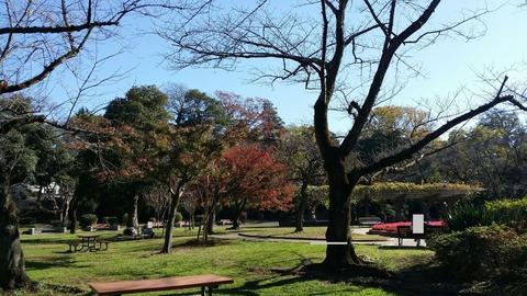 里見公園、噴水ちかくの紅葉