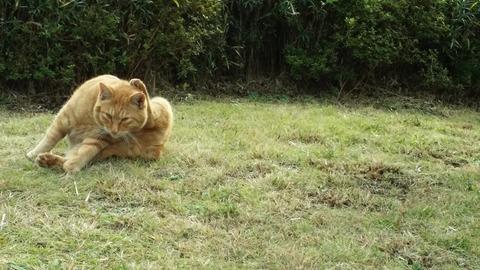 じゅんさい池の猫