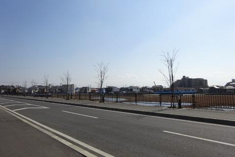 東国分中学校前の道路/桜
